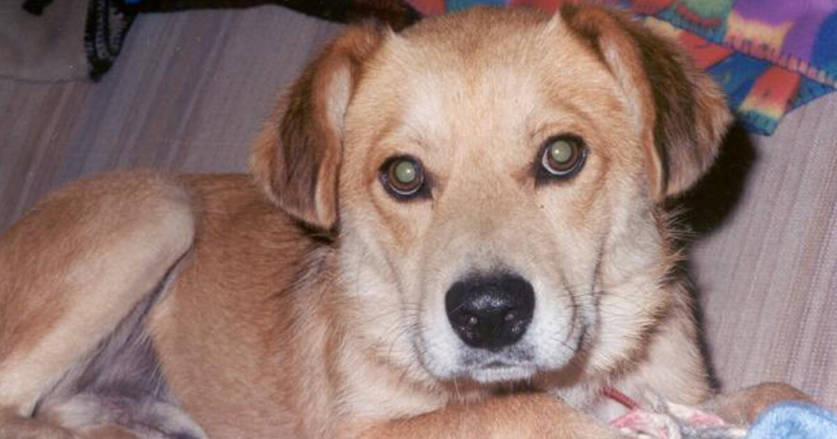 Arizona researchers successful in canine Valley Fever vaccine tests