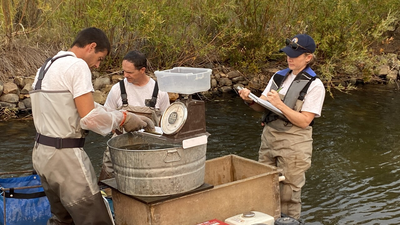 Prickly Pear Fish Count