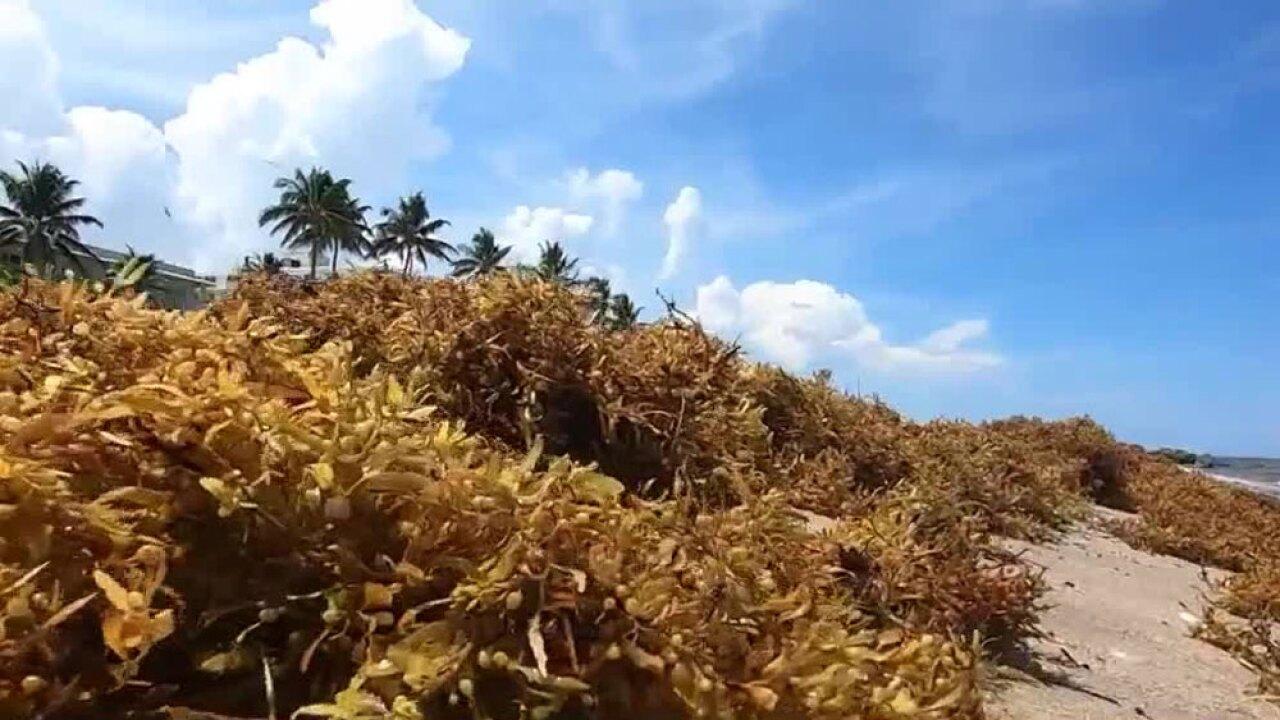 wptv-seaweed-.jpg