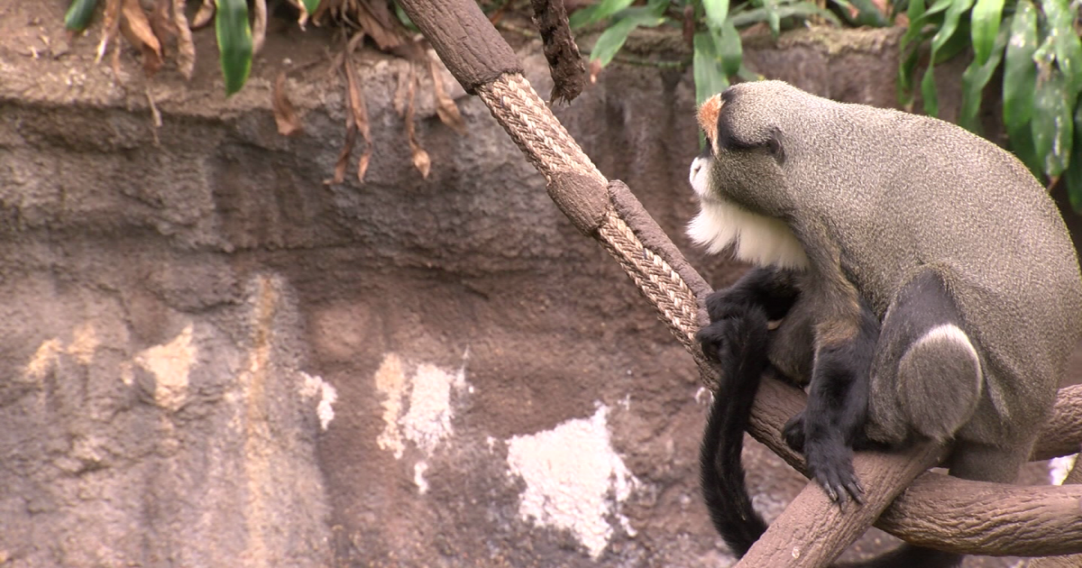 Henry Doorly Zoo announces 12 days of prizes for zoo-goers
