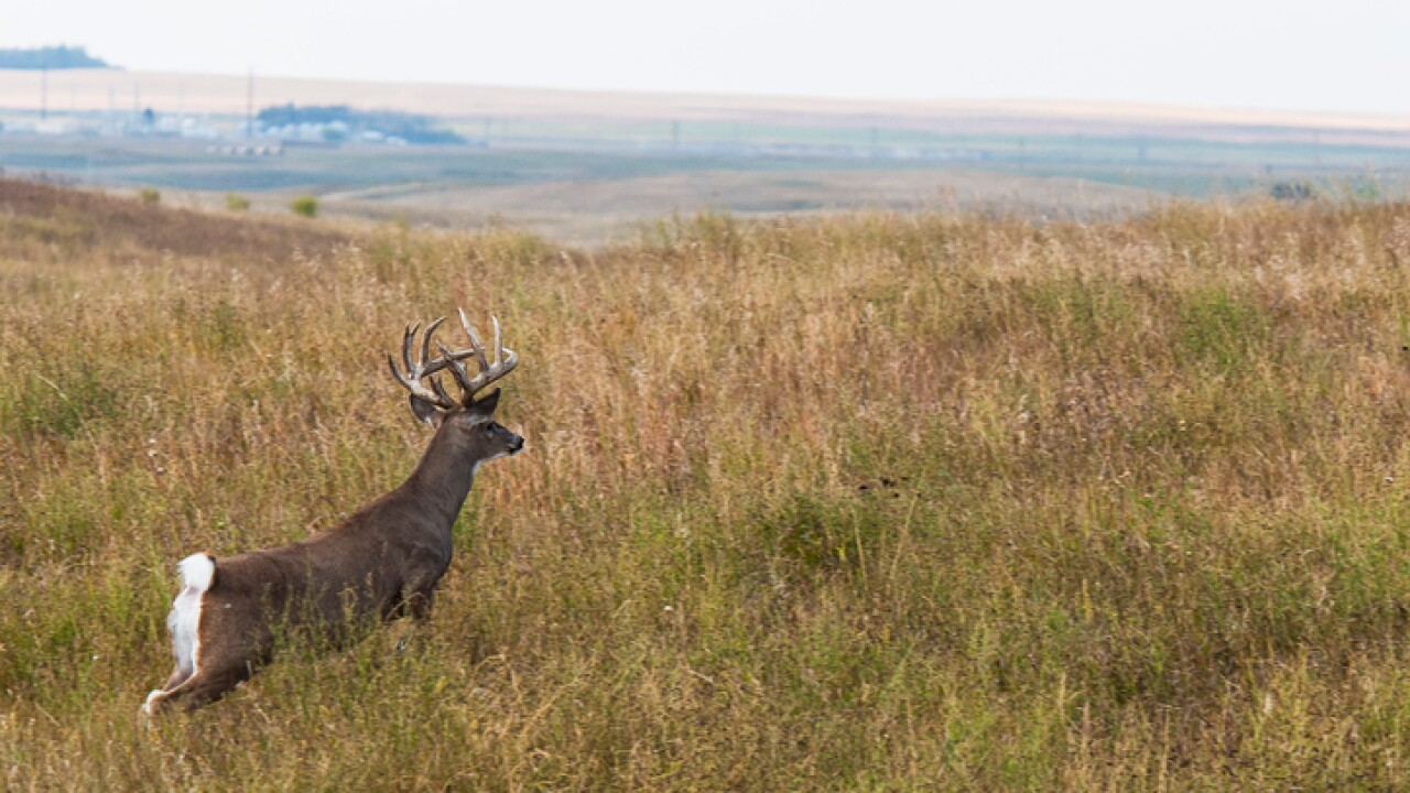 Hunters warned to follow regulations after disease found in some deer