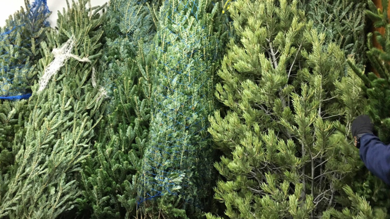 Debbie's Deals: How to get a Christmas tree cutting permit