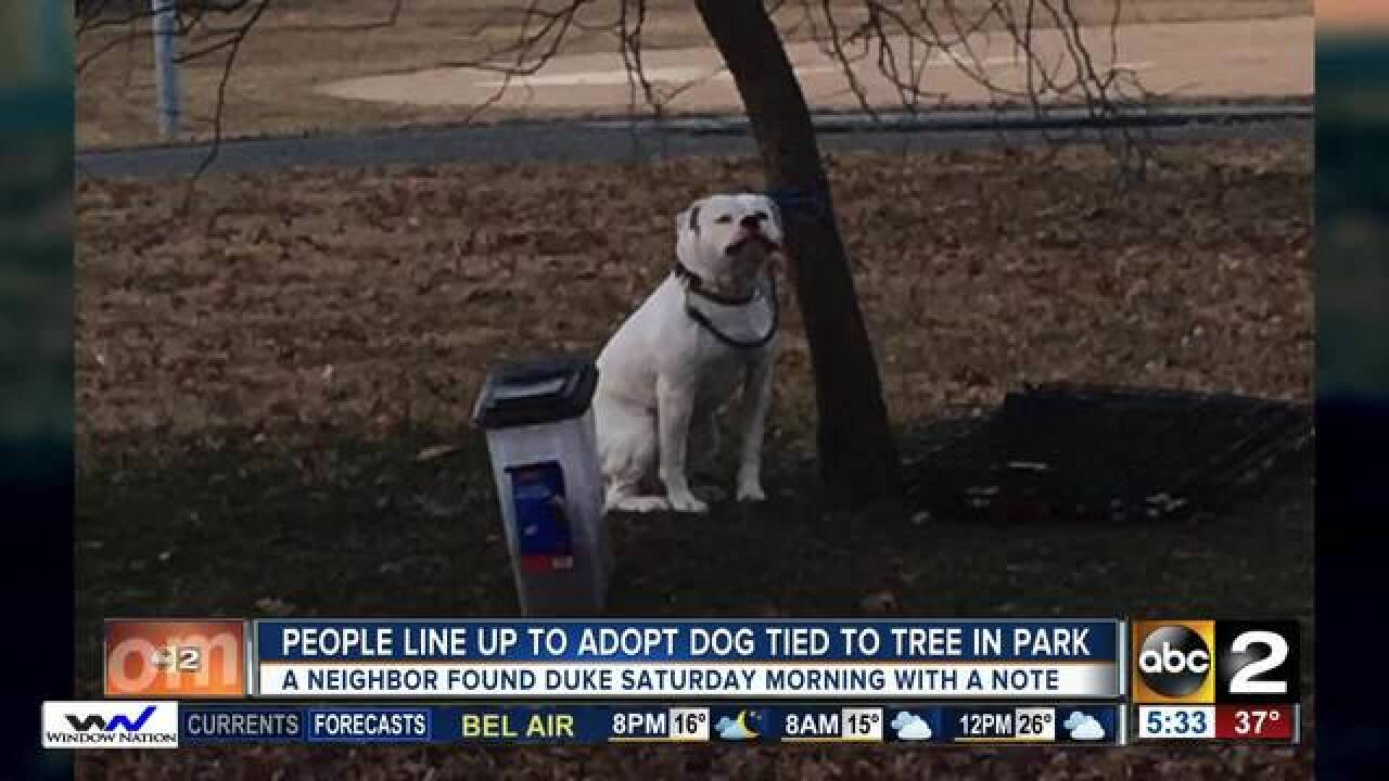Adoption pending for abandoned dog tied to tree