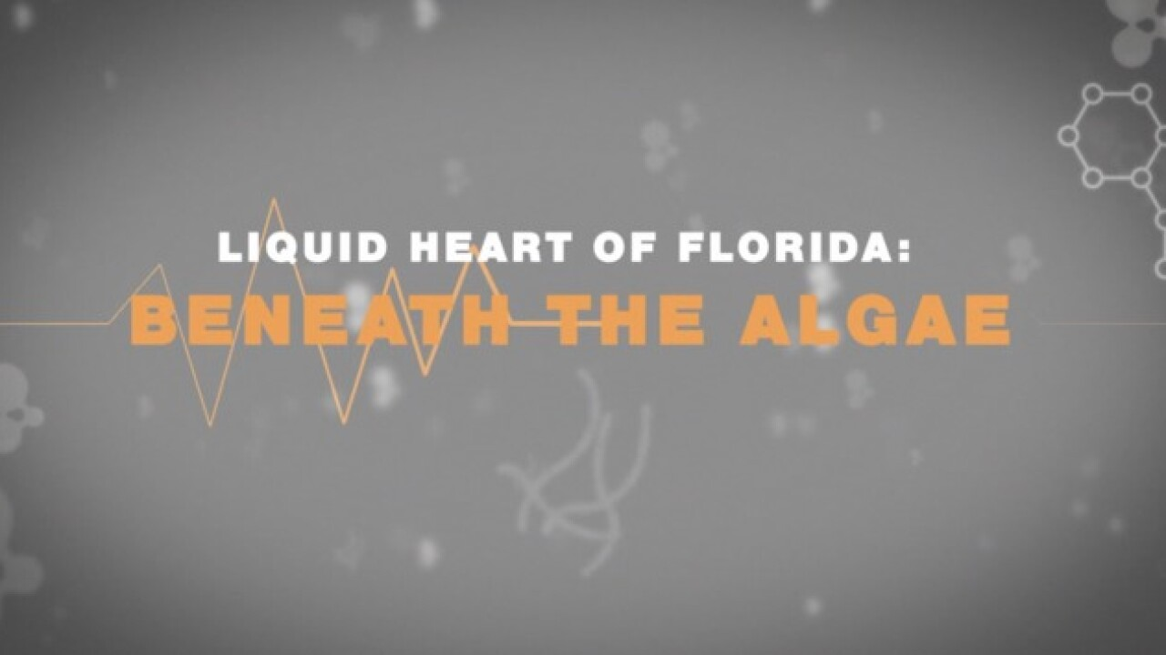 """Liquid Heart of Florida"" Documentary"