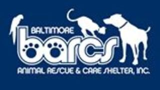 Dog at BARCS tests positive for canine distemper