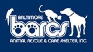BARCS leashes missing; shelter seeking donations