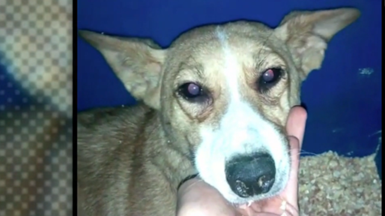 Frightened dog survives years in passageway between buildings