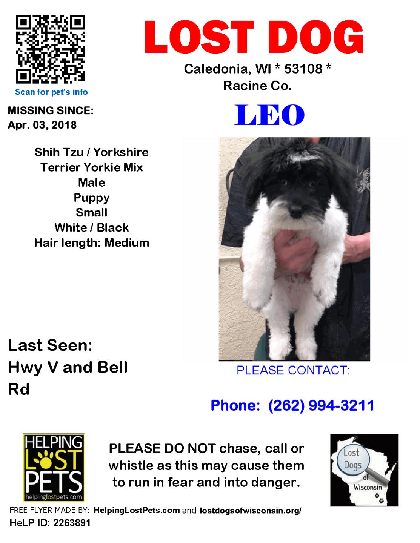 040318 Leo Shih Tzu Puppy.png