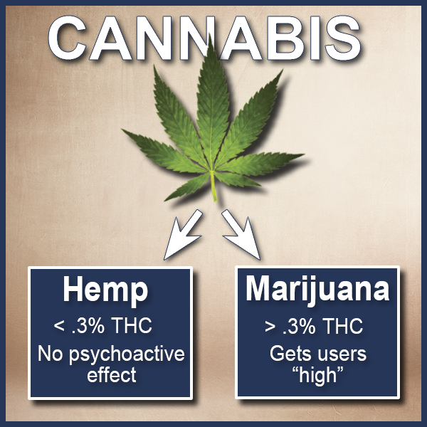 CANNABIS 2.png