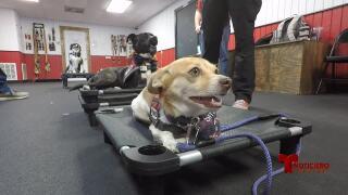recuperacion perros de terapia 0616.jpg
