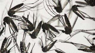 West Nile virus symptoms are similar to COVID-19 at first, experts say
