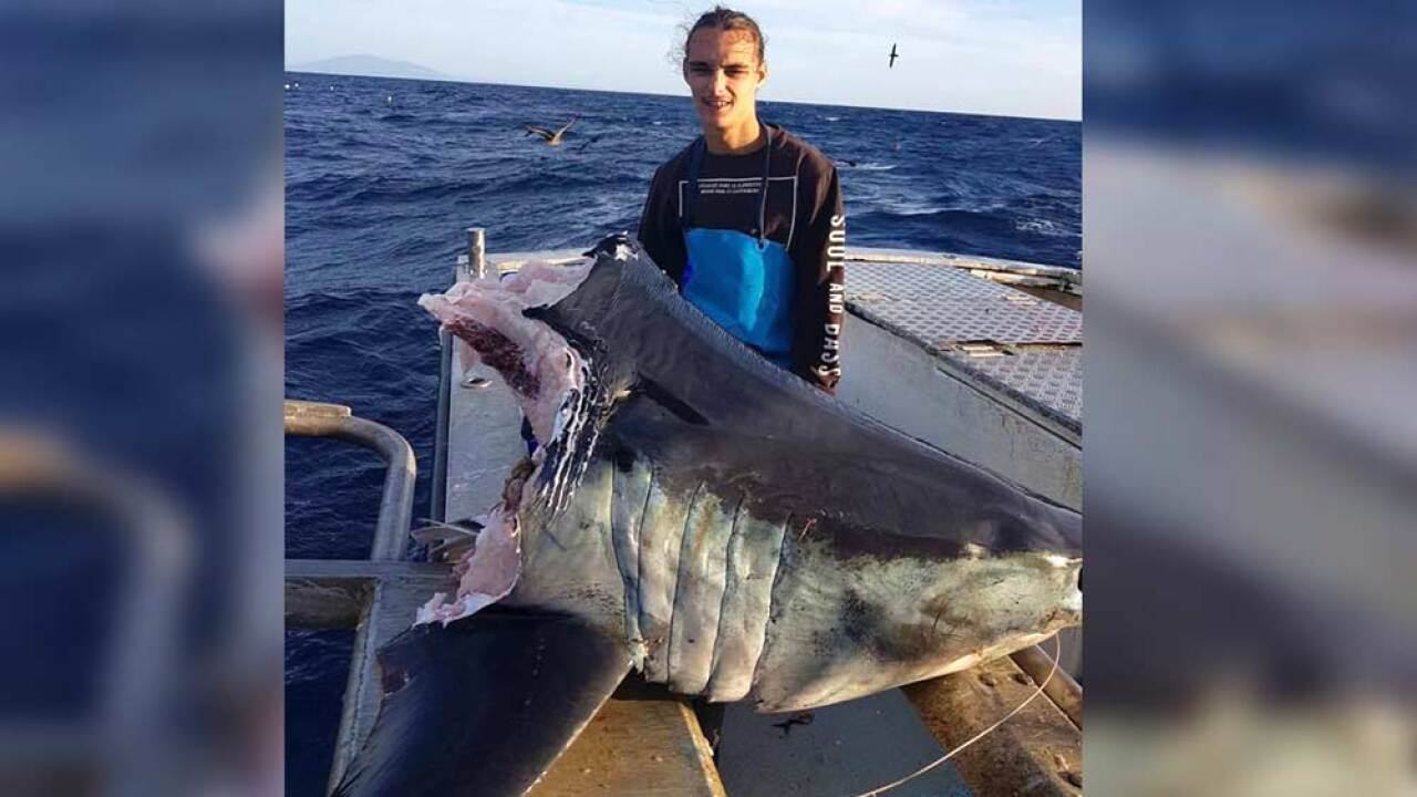 Fisherman catches giant shark -- just as something even