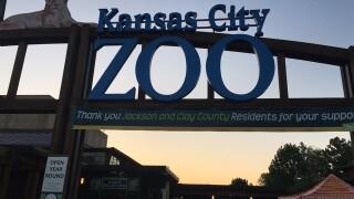 Take a look inside KC Zoo's polar bear exhibit