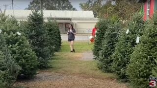 Acadiana shoppers at Pollard's Christmas Tree lot in Lafayette 11-26-2020.JPG