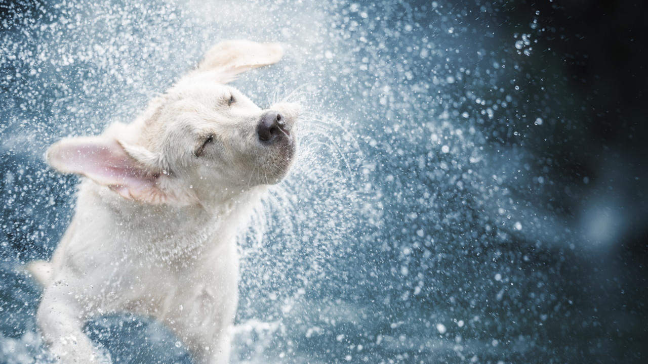 wx-dog in water.png