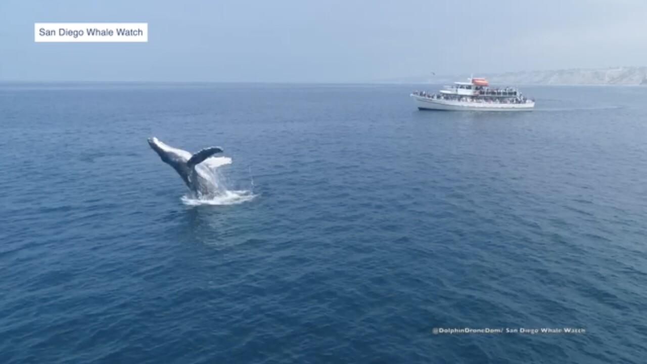 San Diego Whale Watch