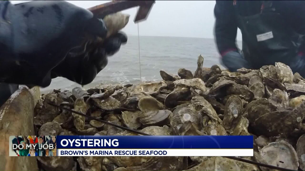 Do My Job: Oystering at Brown'sMarina