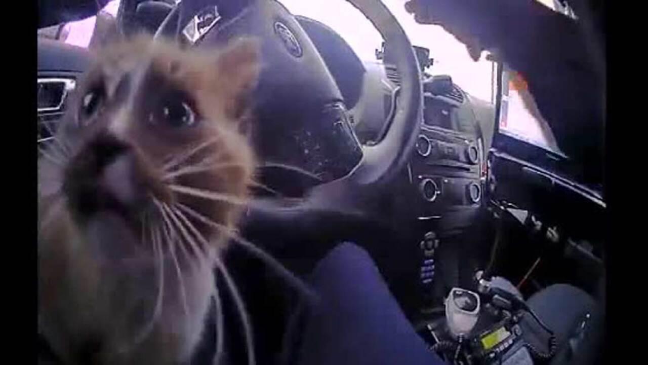 wptv-cat-rescued-interstate.jpg