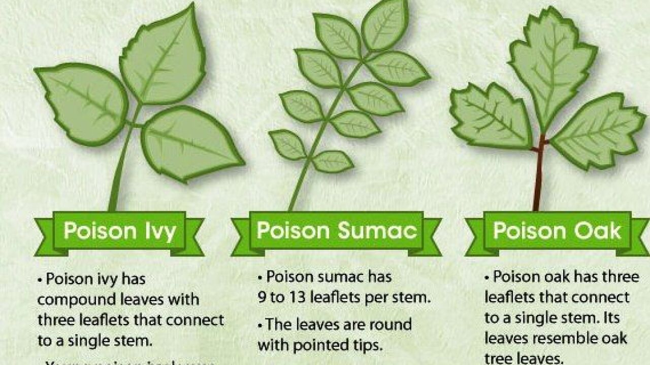 Knowing The Difference Between Poisonous Plants