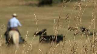 Predators eat away Montana Loss Board budget