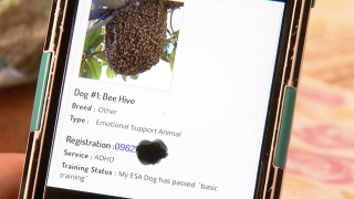 Beehive as support animal