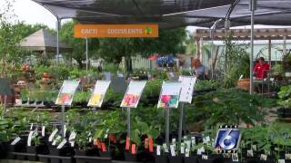 Gill's Garden Center is open to show you how to grow veggies