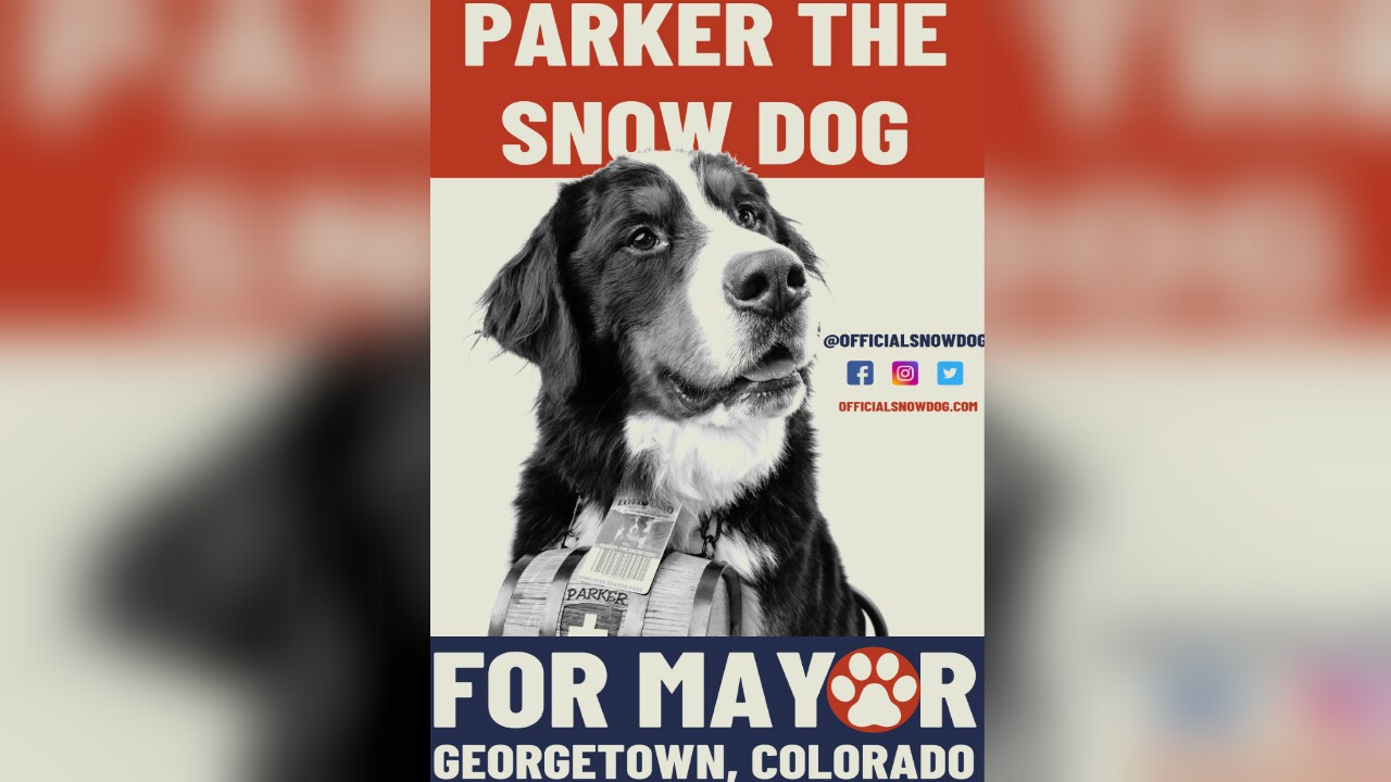 Parker the Snow Dog Sworn in as Mayor of Georgetown, Colorado