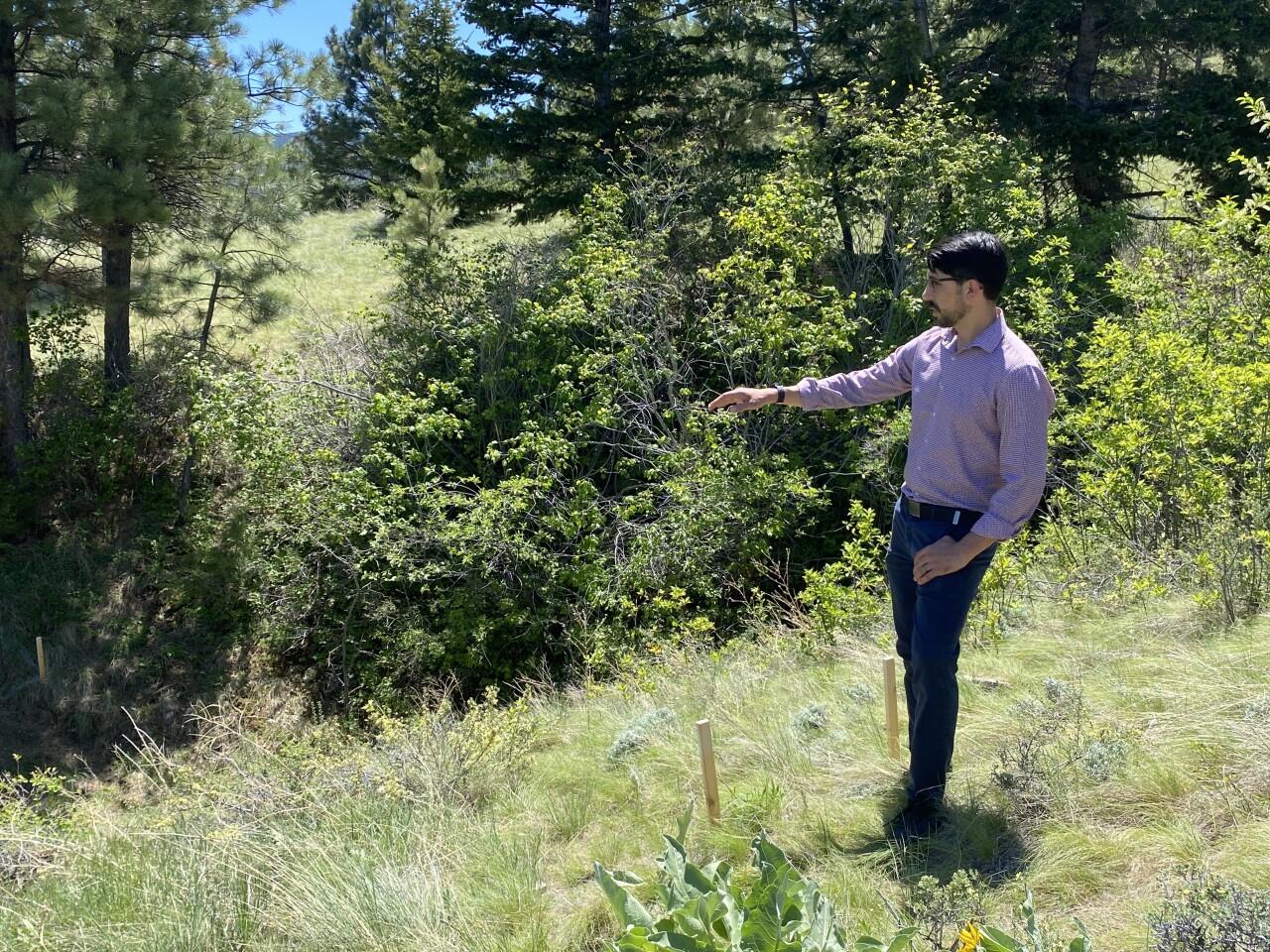 Mount Helena ADA Trail