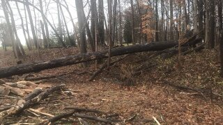 High water, fallen trees create some havoc for drivers