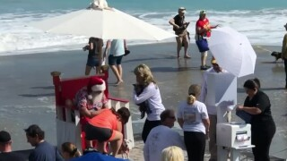 wptv-surf-dog-beach-bash.jpg