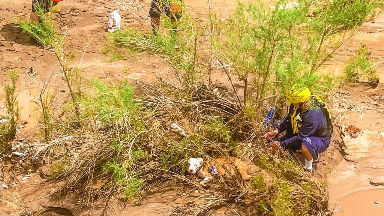 A dog is safe after it found itself trapped on an island in the Rillito on Sunday July 20, 2021.