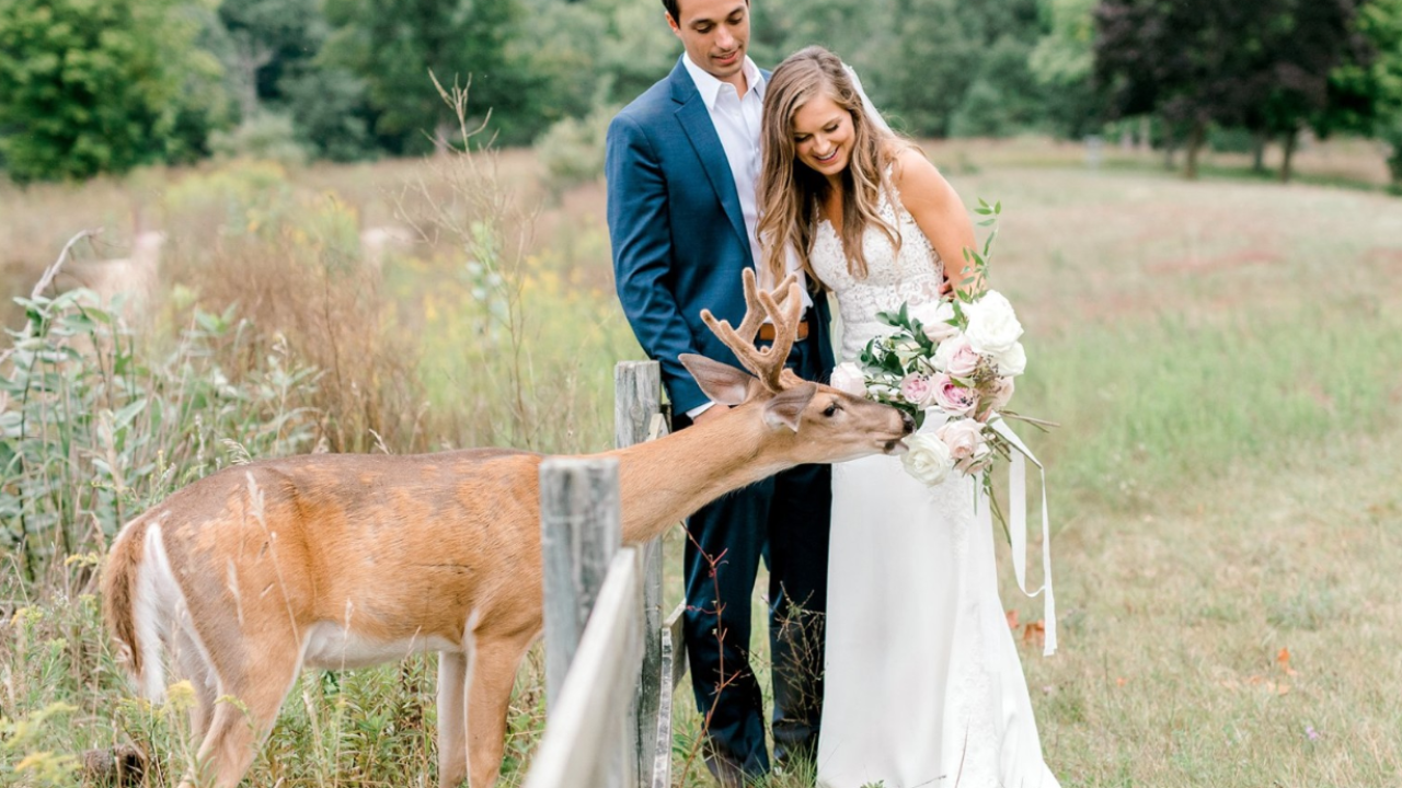 Deer photobombs Michigan couple's wedding photos, eats bouquet