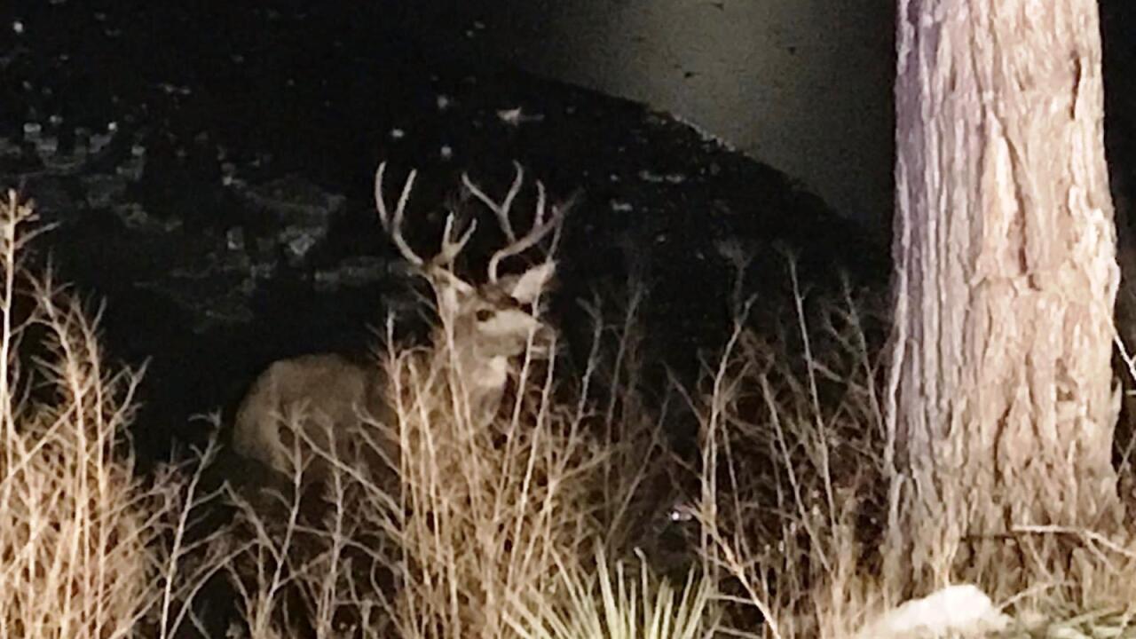 Deer rescued from frozen lake in Colorado Springs