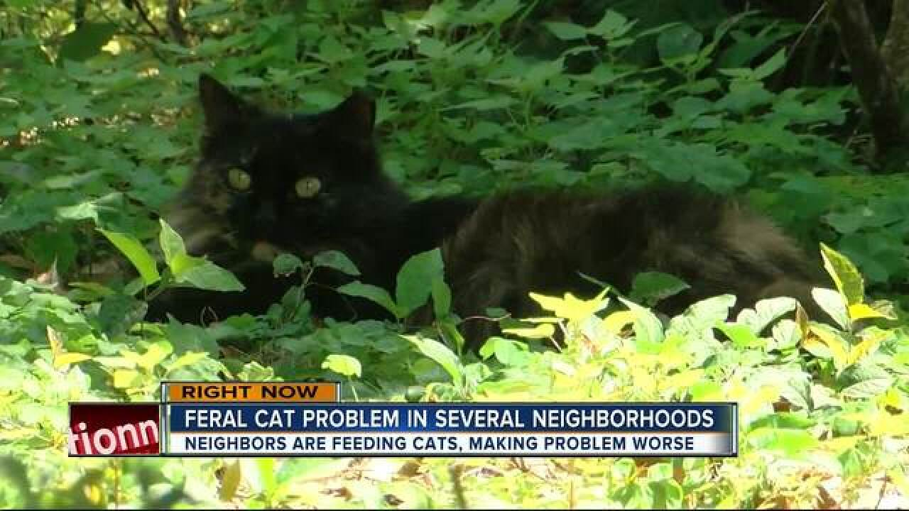 c6a60fdedc89 Feral cats multiplying across Bay Area neighborhoods