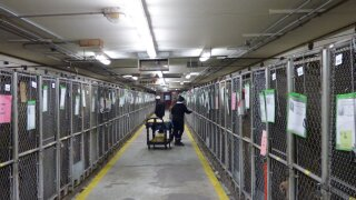 37 dogs euthanized, quarantine extended at MCACC shelter during parvo and distemper outbreak