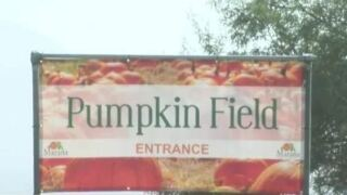There were lots of uncertain moments in the last few months, but now, owner Jon Post, is getting ready for opening day at the Marana Pumpkin Patch.
