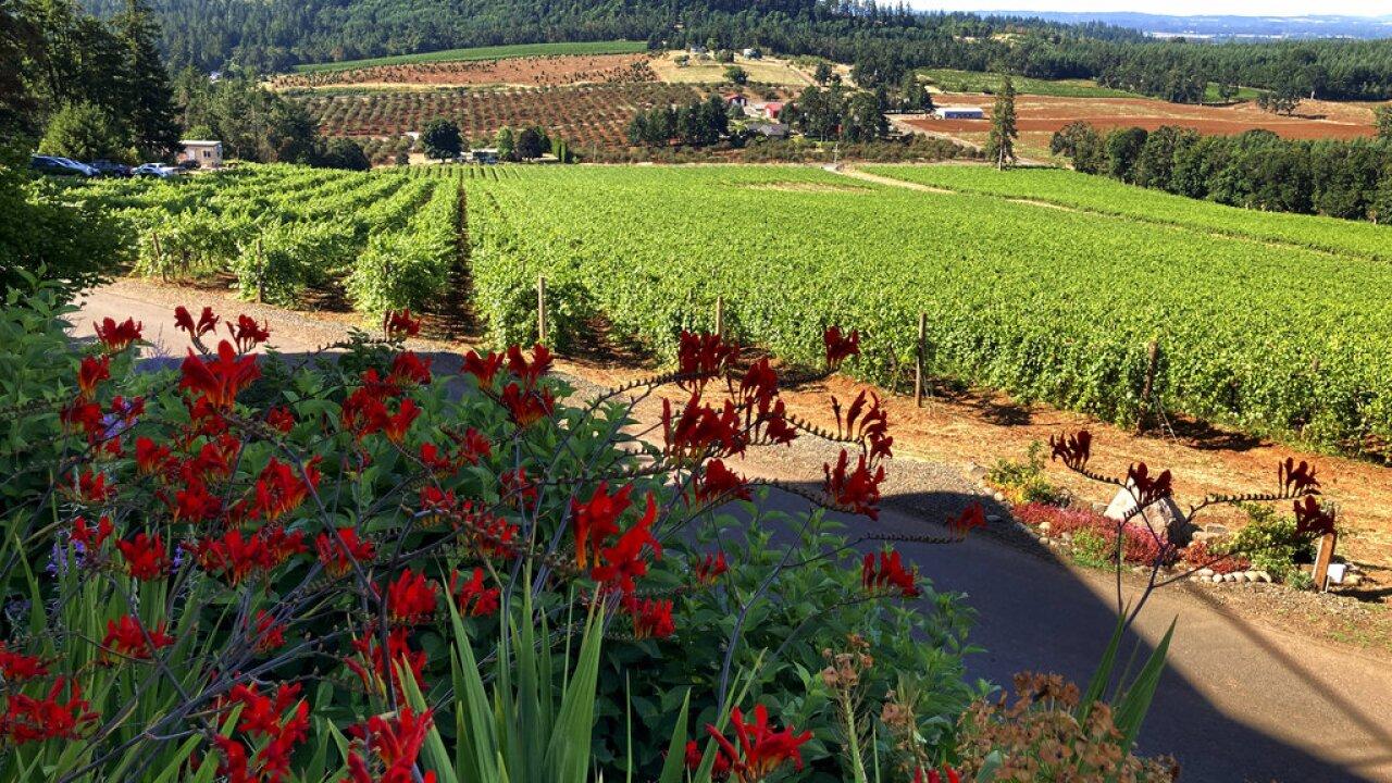 Heat Wave-Vineyards