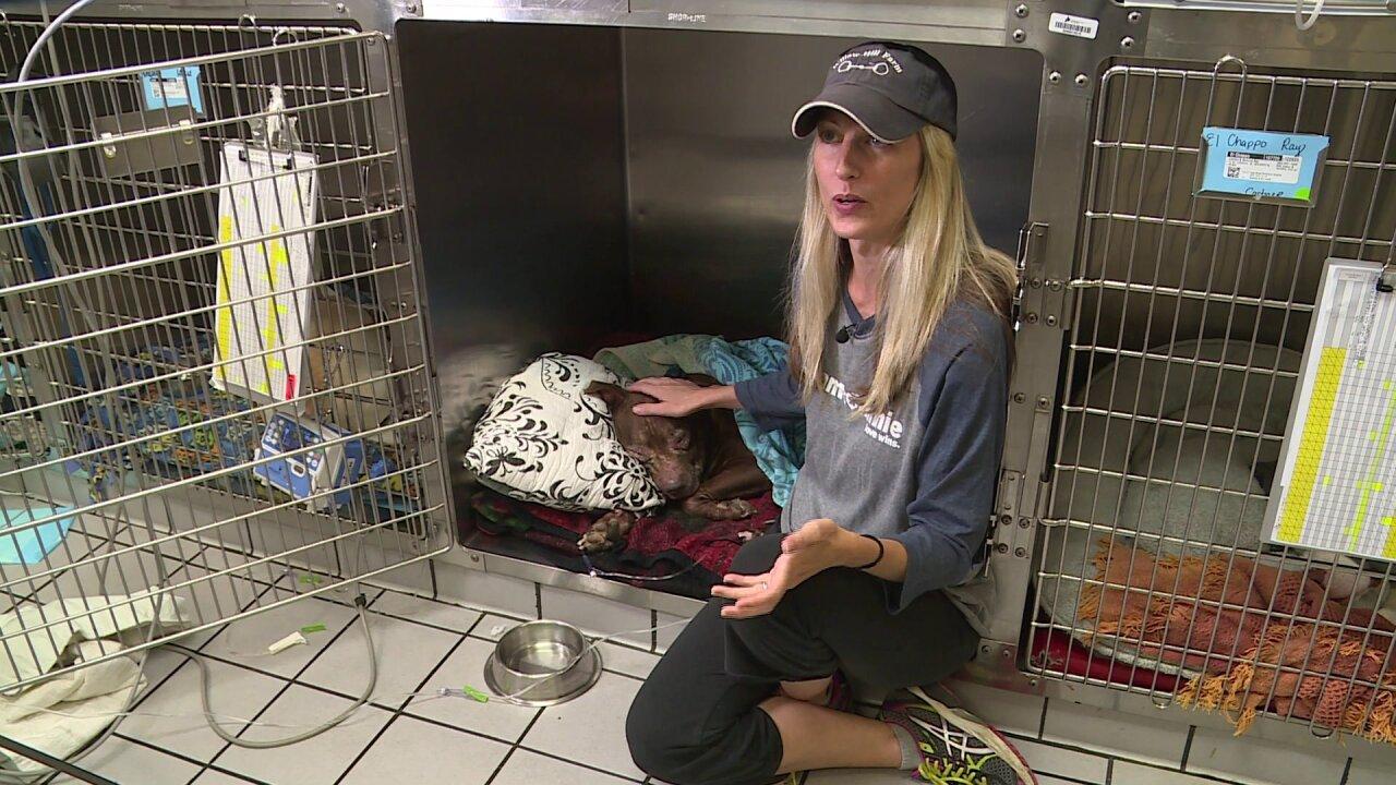 Donations saved 400 animals in Richmond last year: 'Life saving costsmoney'