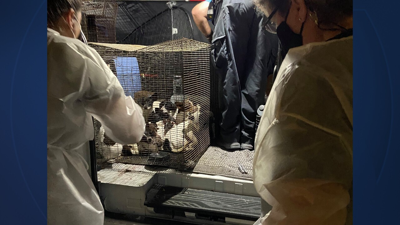 26 dogs and puppies were found in a small wire crate in Indian River County on April 9, 2021 (1).jpg