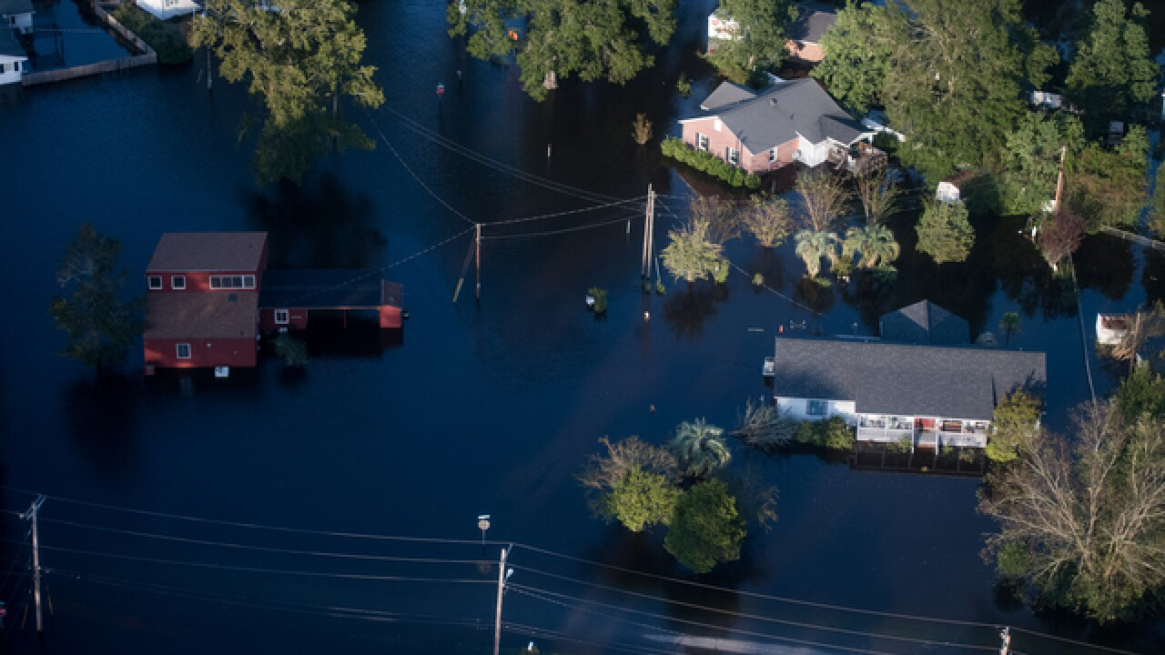 1.7 million chickens drowned in Hurricane Florence flood waters