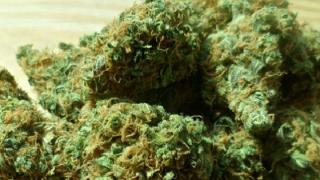 Deputies ask man to quit calling about his stolen marijuana.png