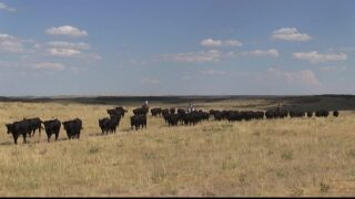 Livestock reimbursement bill passes Montana Legislature