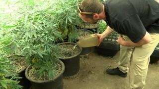 Montana marijuana dispensary hopeful on future of the industry