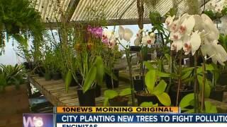 City of Encinitas plants oak trees to fight polution
