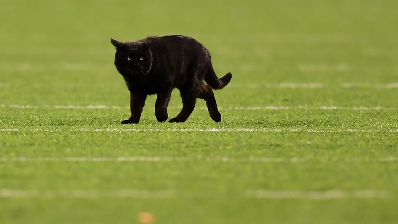 Monday night game delayed by black cat in second quarter