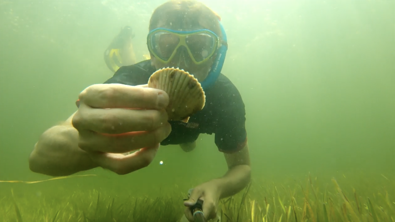 Scalloping.png