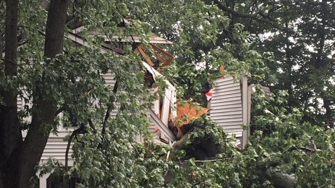 tree on house 3.jpg
