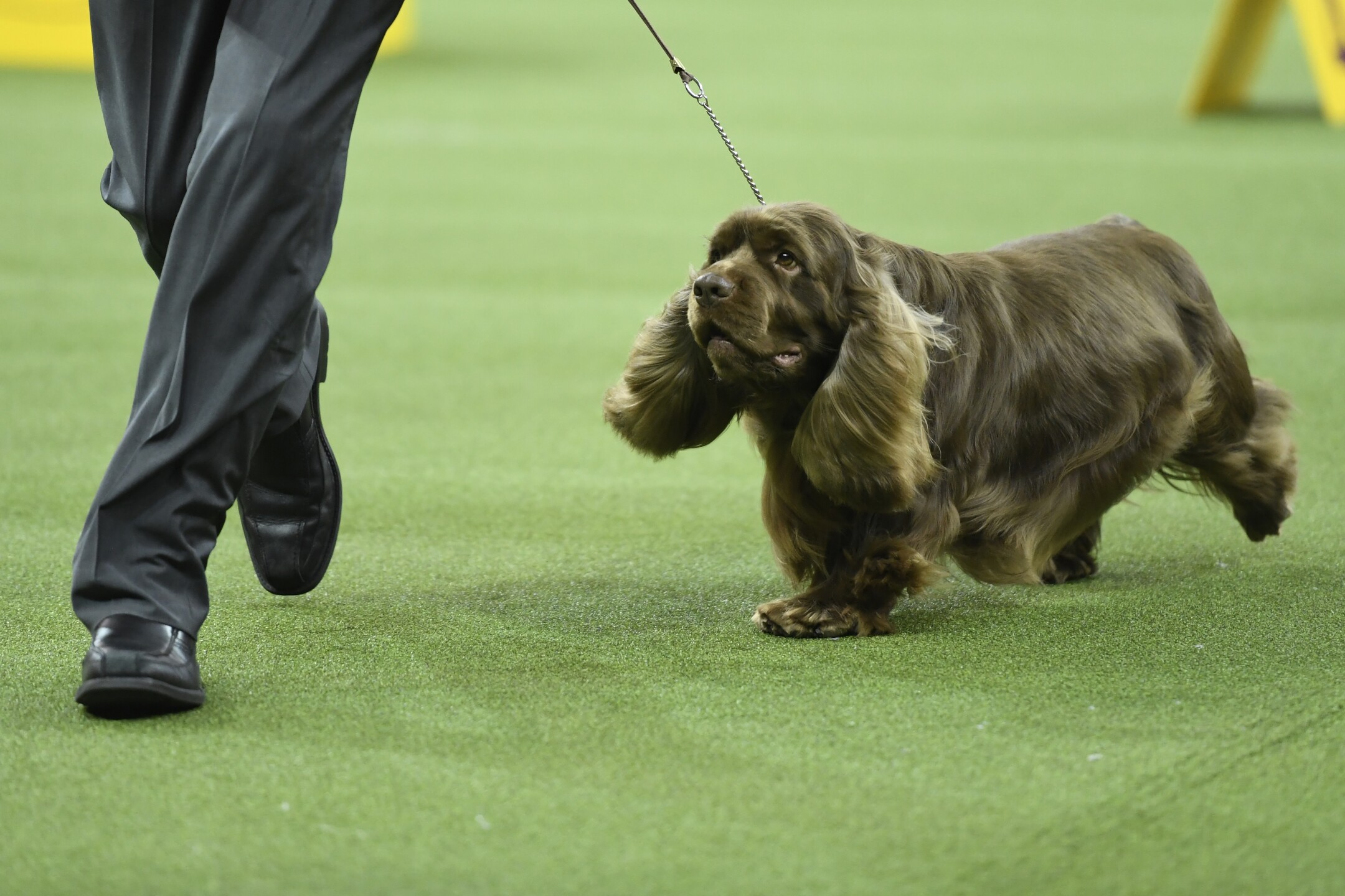 Which Westminster competitor is the cutest? Only you can decide