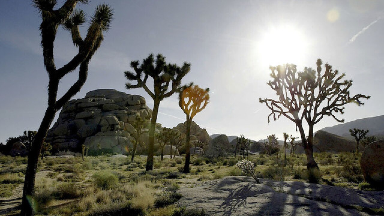Man sentenced to five years for setting fire at Joshua Tree National Park