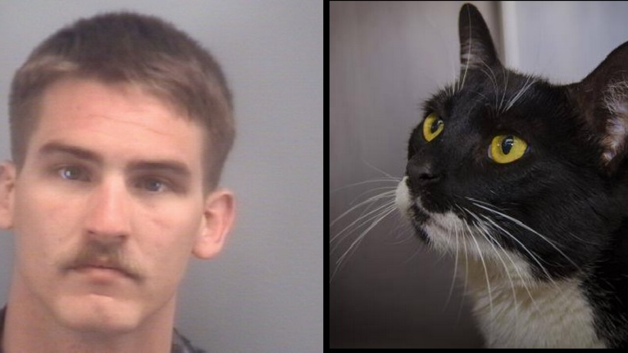 Virginia Beach man sentenced to 18 months for strangling cat todeath